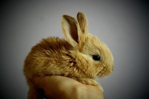 rabbit-373691_1280
