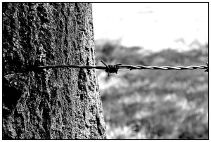 barbed-wire-887279_1280